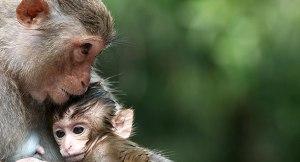 610_monkeys_emotion