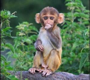 safe monkey baby